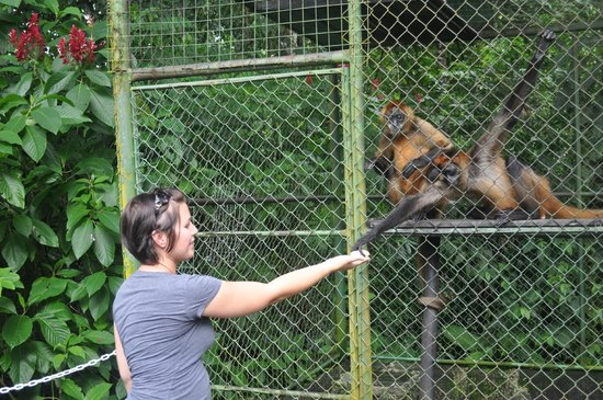 Proyecto Asis: Safely feeding hungry monkeys!