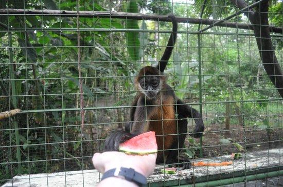 Proyecto Asis: Feeding the monkeys