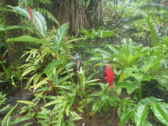Tabacon Hot Springs : Nice grounds