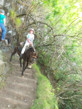 Dunbar Beachfront Cottages: Dawn riding down the switchbacks on a mule