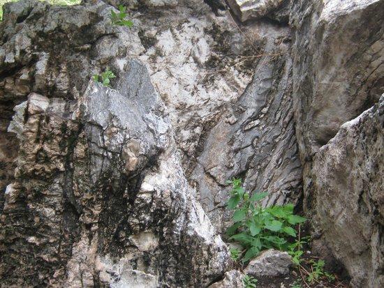 Coronado National Memorial : plant tucked into the rock