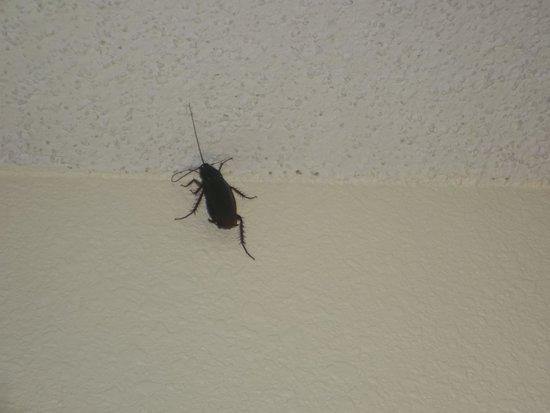Bermuda Sands Motel: Roach found on wall