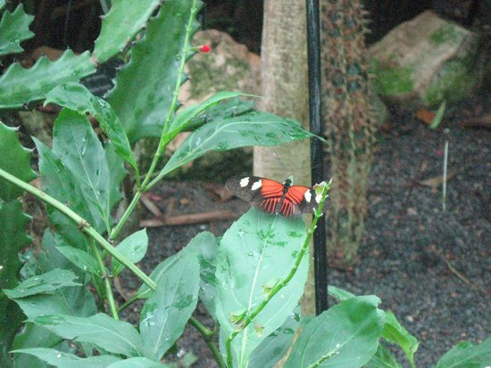 Museum of Life + Science: butterfly