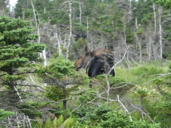 Skyline Trail: Look carefully for wildlife!