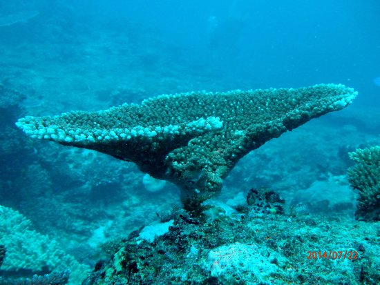Blue Lagoon Beach Resort: Diving