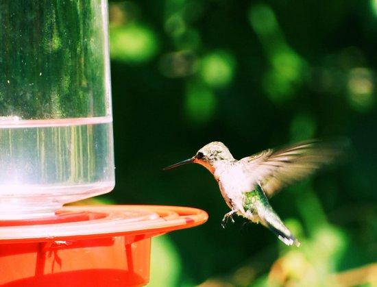 Land Between the Lakes National Recreation Area: Hummingbird Festival 2014