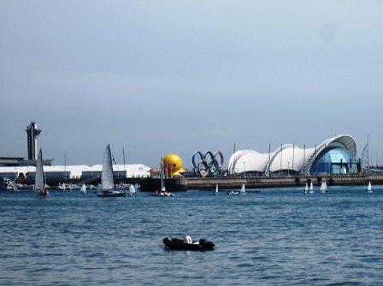 Olympic Sailing Center : 有名なアヒルが浮かんでいた