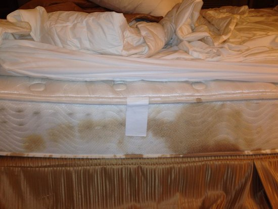 Clarion Inn & Suites: Filthy bed that broke