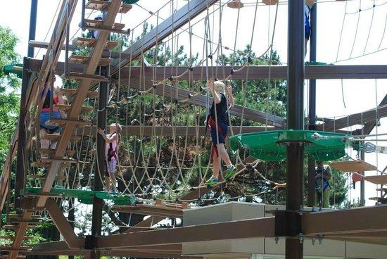 Toronto Zoo: Gorilla climb course