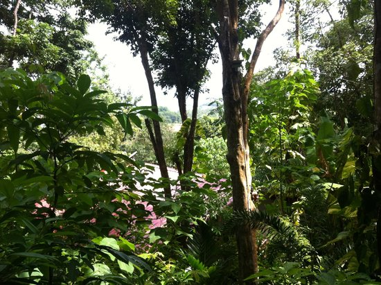 Ambong Ambong: Our rainforest view