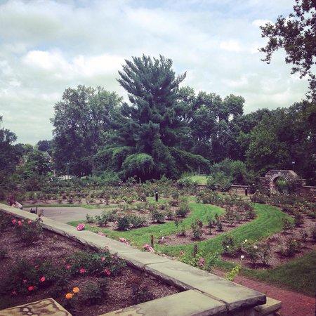 Rose garden at Ritter Park