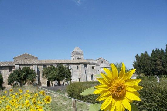 Saint-Paul de Mausole : A view of the asylum from the garden
