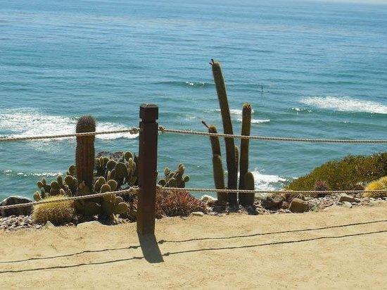 Self Realization Fellowship Hermitage & Meditation Gardens: Ocean view