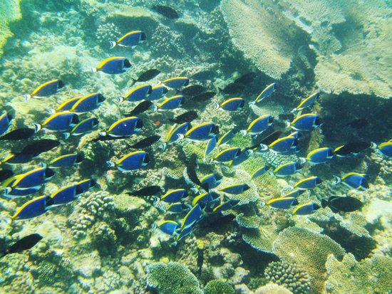 Kihaa Maldives: 出海浮潜