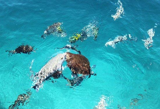 Kihaa Maldives: 2