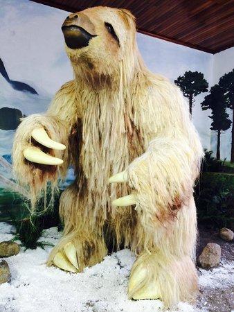 Museo de San Ramon (Museum of San Ramon): Sloth