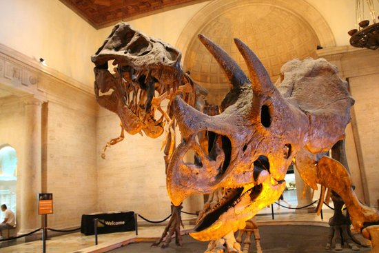 Natural History Museum of Los Angeles County: T-Rex and Triceratops skeletons in the lobby - WOW!