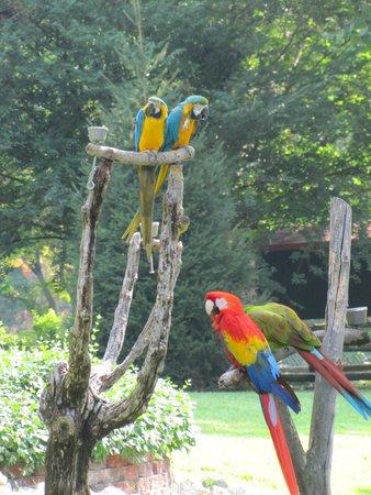 Grant's Farm: Beautiful Macaws