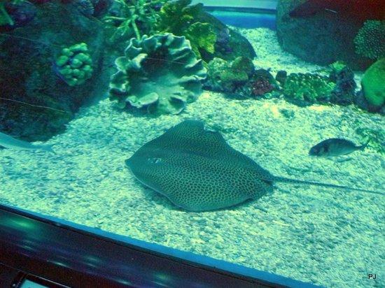 Dubai Aquarium & Underwater Zoo: Leopord Ray