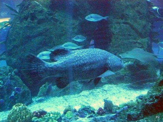 Dubai Aquarium & Underwater Zoo: Big fish
