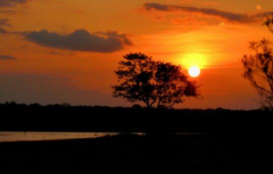 Timbavati Safari Lodge: Manyeleti sunset drive