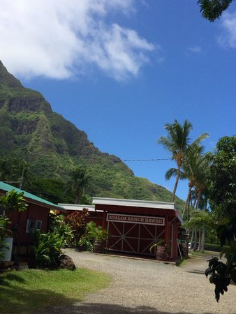 Kualoa Regional Park : Great macedamia ranch right next to the park