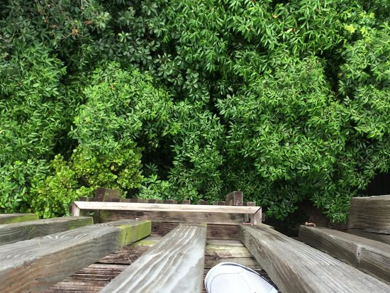 Gumbo Limbo Nature Center: Top of the tower.