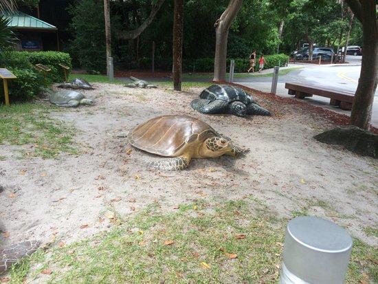 Gumbo Limbo Nature Center: Turtles