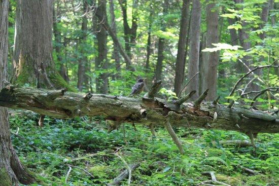 Inglis Falls: During the hike