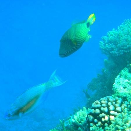 Sunlover Reef Cruises: Snorkelling at Moore Reef