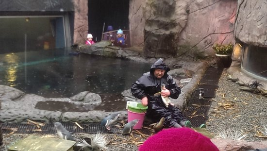 International Antarctic Centre: Penguin Feeding