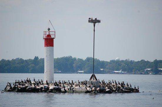 Gananoque, Canadá: Bird life en route