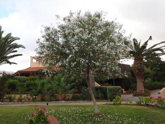 Anissa Beach Hotel: территория