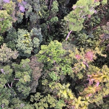 Down Under Tours - Day Tours: above the rainforest.
