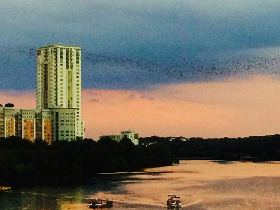 Congress Avenue Bridge / Austin Bats: Congress Ave Bridge - Bats Against Skyline