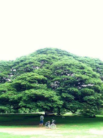 TEP Adventure: stunning rain tree