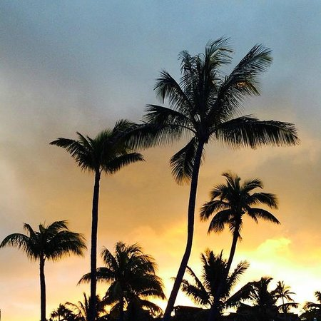 Long Beach Golf & Spa Resort : palm trees