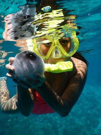 Pemuteran, Indonesia: Me and cute puffer fish