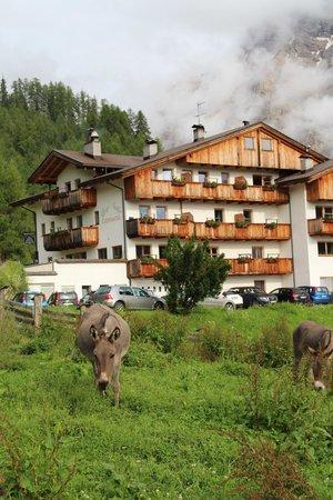 Albergo Ciurnadu : L'hotel e i suoi amici