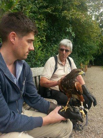 York Bird of Prey Centre: out on hawk walk