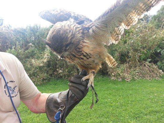 York Bird of Prey Centre: eagle owl