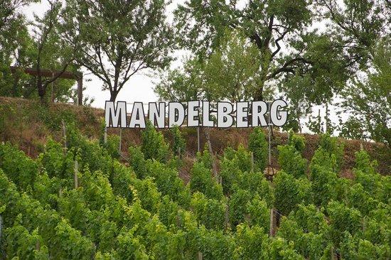 Le Mandelberg : Mandelberg grand cru vineyard behind the hotel
