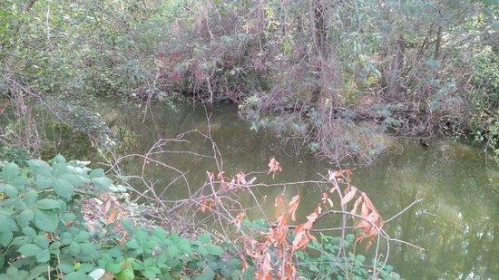 Los Gatos Creek Trail : The creek again
