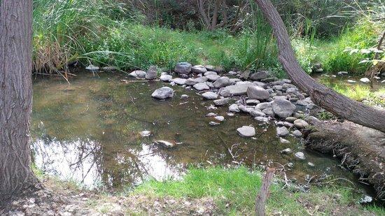 Los Gatos Creek Trail : The creek