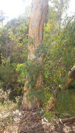 Los Gatos Creek Trail : Shootting into the sky