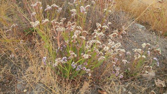 El mejor calor y la sequía de flores resistentes para su jardín | Dengarden