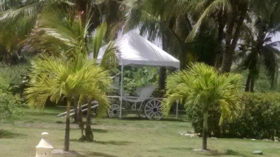 Caribe Club Princess Beach Resort & Spa: Parque y jardines