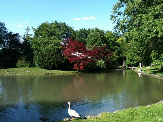 Interno giardino foto di giardino inglese monaco di - Giardino interno ...