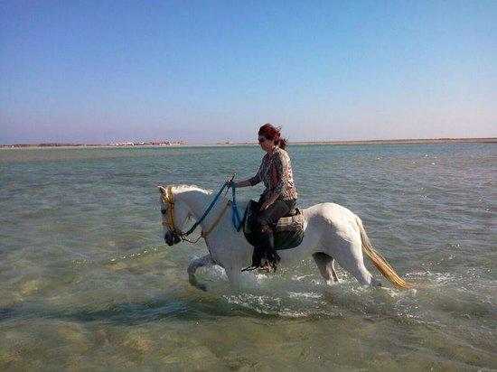 Dahab, Egipt: Beach trip