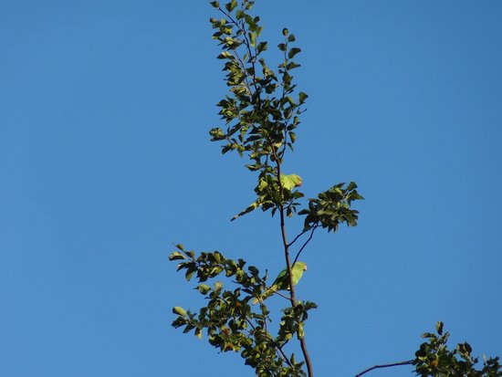 Camden Locks Canalside: birds in the trees